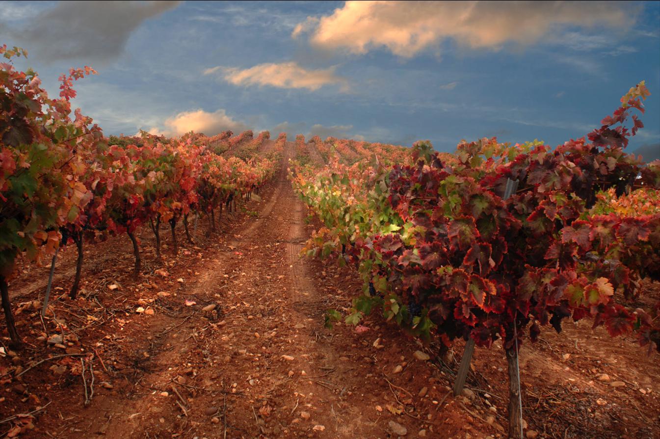 La Montesa Vineyard