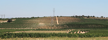 Vineyard_Rueda copy